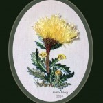 Yellow Cornflowers BE