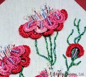 Carnelias Closeup