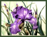 Elsa Williams's Grape Iris