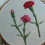 Okyos Carnations