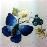 Adonis Blue Buttterfly