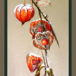 Physalis cross stitch